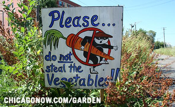 В США всё чаще овощи крадут прямо с огорода