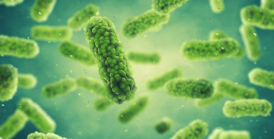 Bacteria , Germ infection