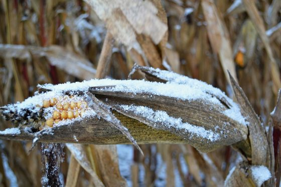 """Officials Are Using The Word """"Disaster"""" To Describe The Widespread Crop Failures Happening All Over America"""